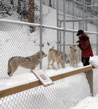 Panorama's wolf education centre