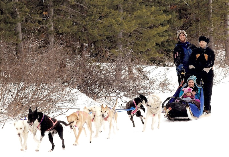Dog sledding in Canmore, AB