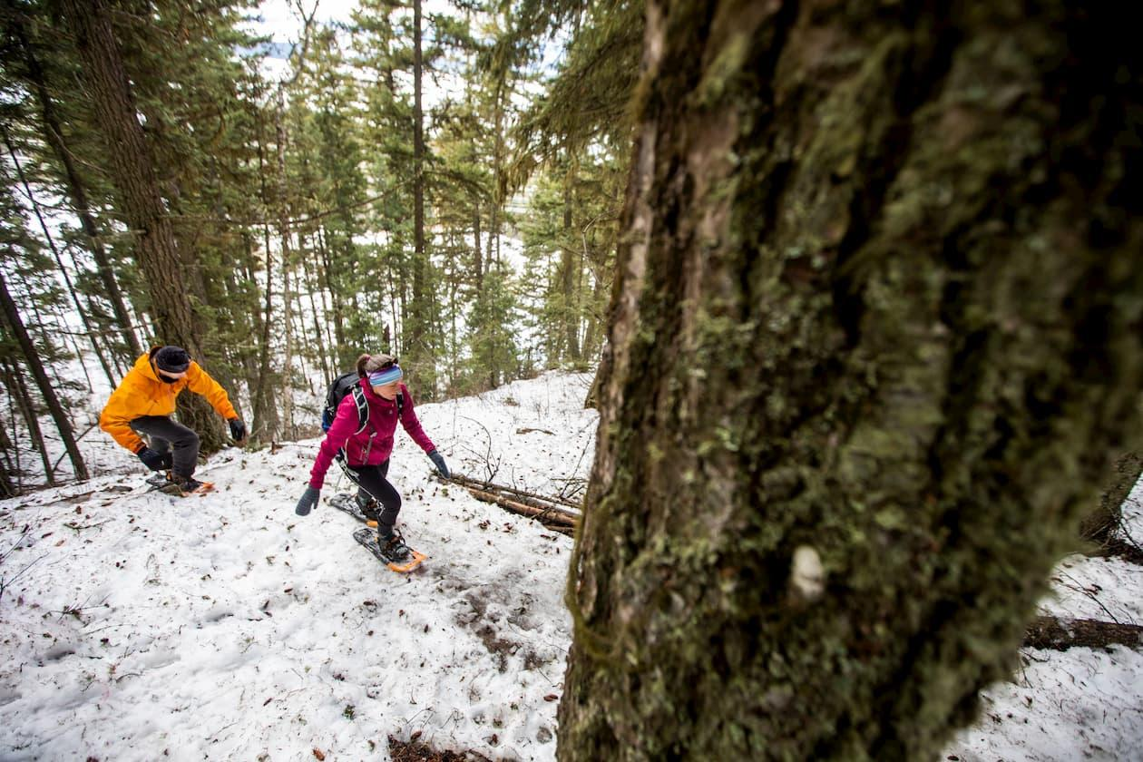 Quesnel winter trails