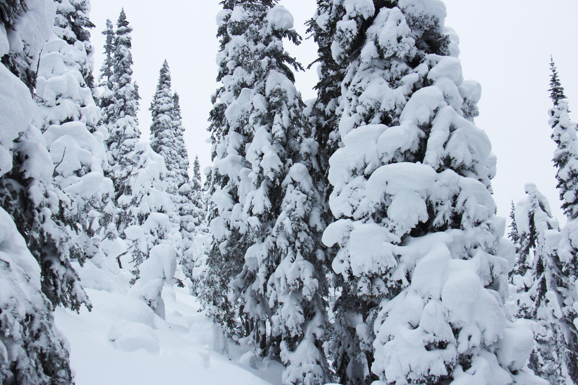 Tree skiing Powder King